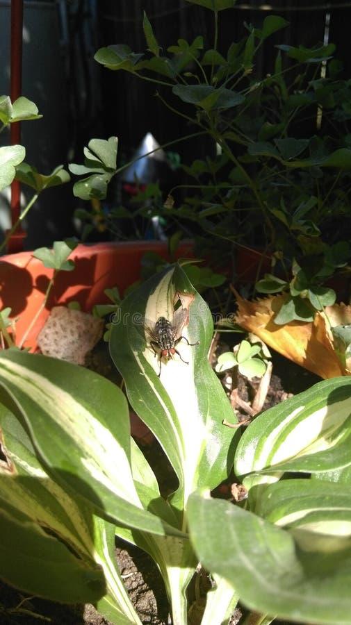 Μύγα σε εγκαταστάσεις στοκ φωτογραφία με δικαίωμα ελεύθερης χρήσης
