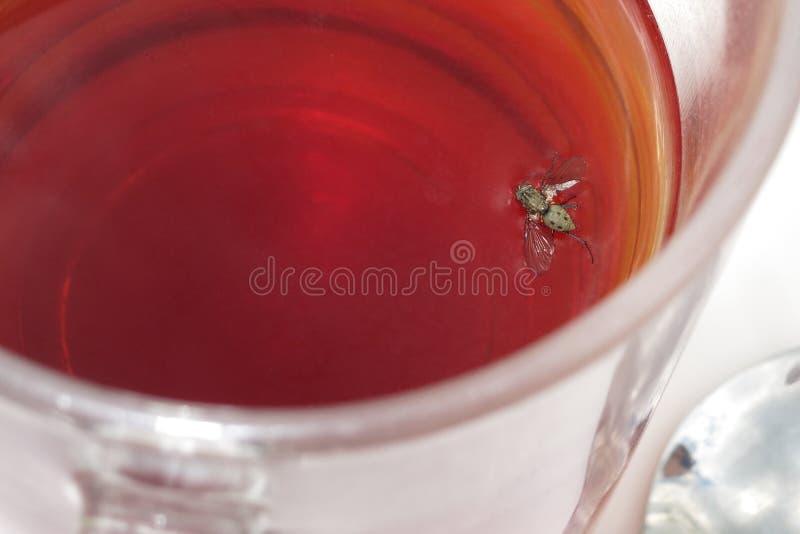 Μύγα στο ποτό στοκ εικόνα