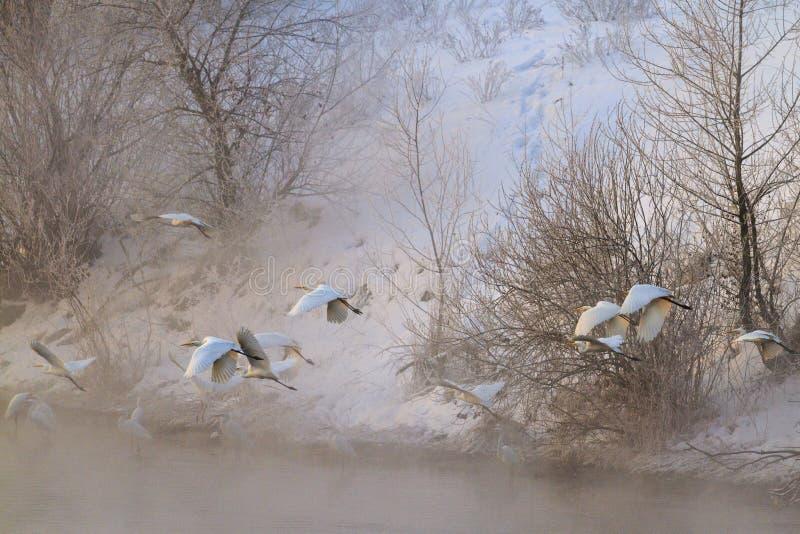 Μύγα τσικνιάδων πέρα από το χειμερινό ποταμό στην ανατολή στοκ εικόνα