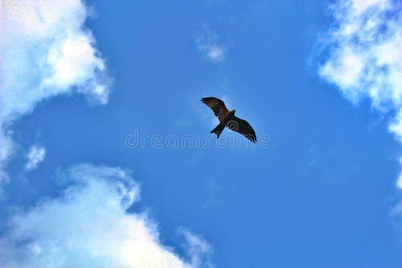 Μύγα όπως έναν αετό! στοκ φωτογραφία με δικαίωμα ελεύθερης χρήσης