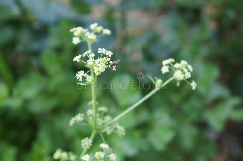 Μύγα στοκ εικόνα