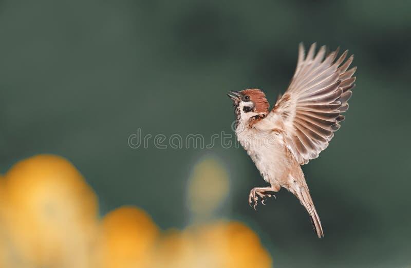 μύγες πουλιών επάνω και ισιωμένος τα φτερά και τα φτερά στοκ εικόνα