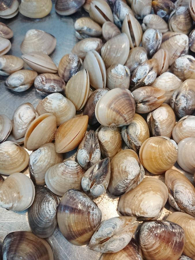 Μύδια που πωλούνται σε ασιατική υγρή αγορά στοκ εικόνα
