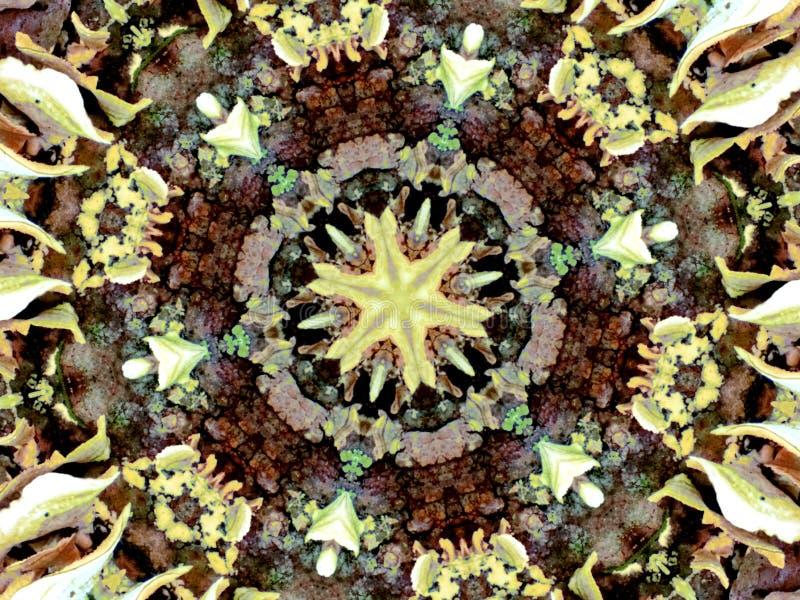 Μύκητας καλειδοσκόπιων στοκ φωτογραφίες με δικαίωμα ελεύθερης χρήσης