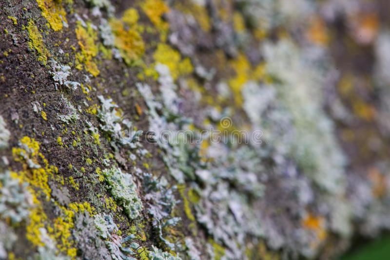 μύκητας στοκ φωτογραφίες