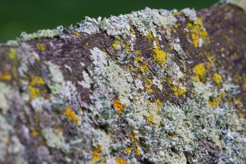 μύκητας στοκ εικόνες με δικαίωμα ελεύθερης χρήσης