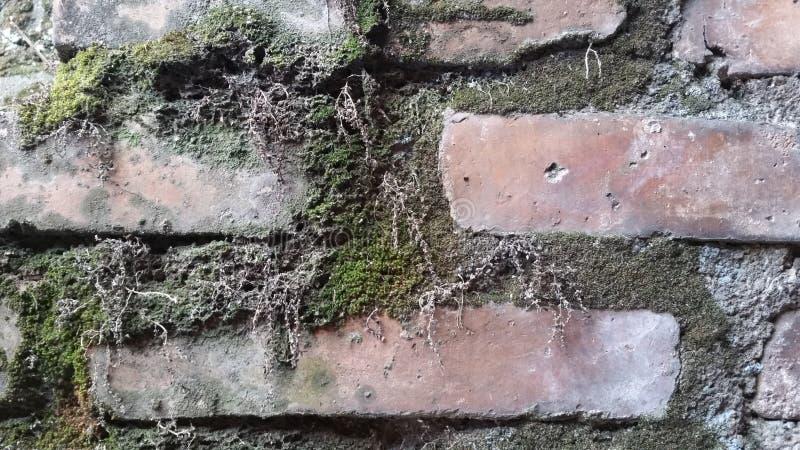 Μύκητες στα τούβλα στοκ εικόνες