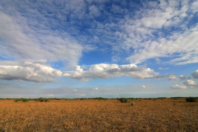 Νάνα δέντρα μαγγροβίων του εθνικού πάρκου Everglades, Φλώριδα στοκ φωτογραφία