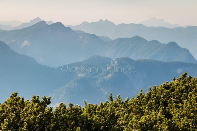 Νάνοι θάμνοι πεύκων βουνών με το ηλιοβασίλεμα πέρα από τις σειρές βουνών στοκ εικόνα με δικαίωμα ελεύθερης χρήσης