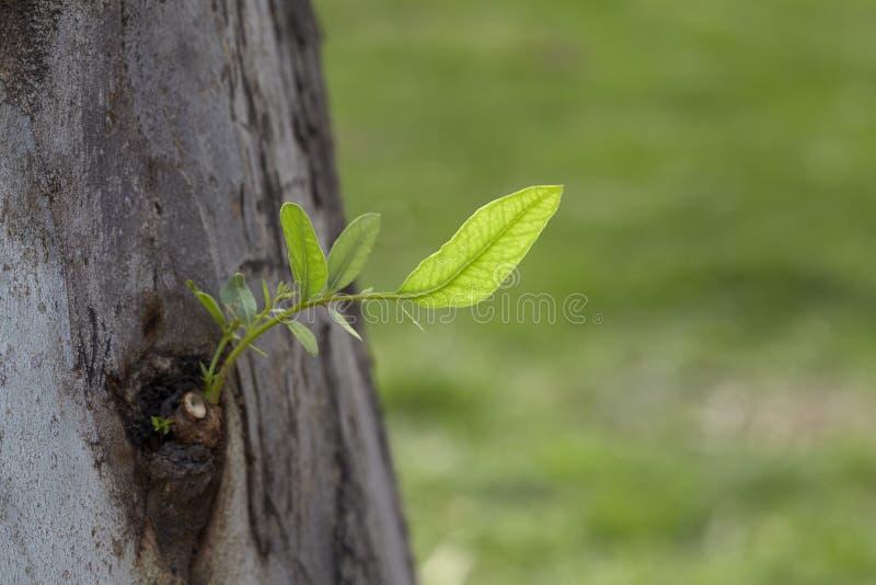 νέα δέντρα φύλλων στοκ φωτογραφία με δικαίωμα ελεύθερης χρήσης