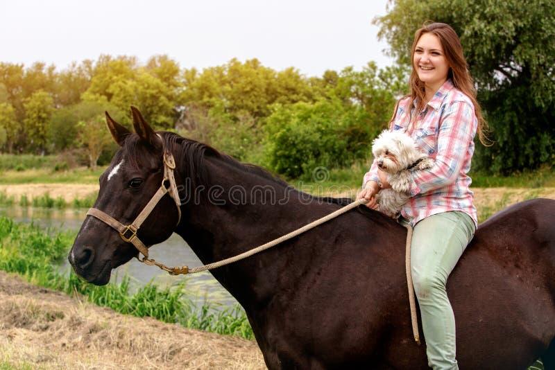 Νέα γελώντας γυναίκα με το άλογο και την της λίγο σκυλί στοκ φωτογραφία