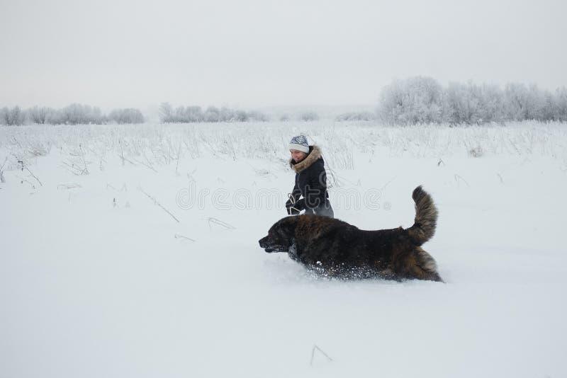 Νέα γυναίκα με το καυκάσιο σκυλί ποιμένων που τρέχει στο χιονισμένο τομέα στην παγωμένη χειμερινή ημέρα στοκ εικόνες