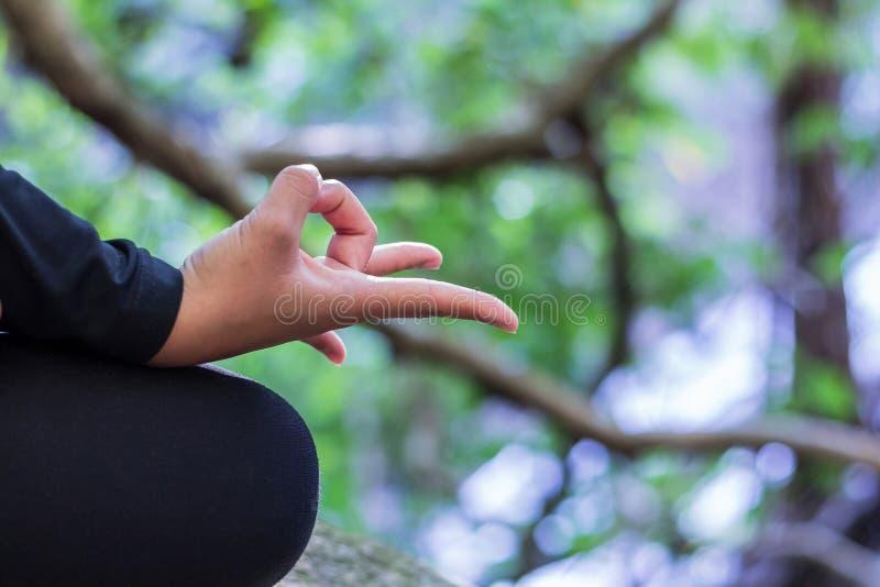 Νέα γυναίκα που κάνει τη γιόγκα στην περιοχή φύσης στοκ φωτογραφίες