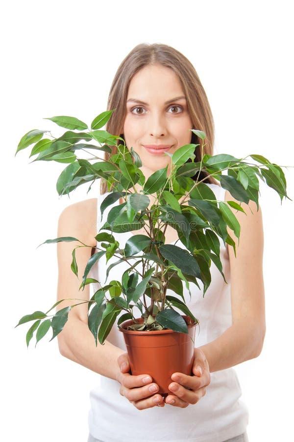 Νέα γυναίκα που κρατά houseplant, isolaterd στο λευκό στοκ φωτογραφία