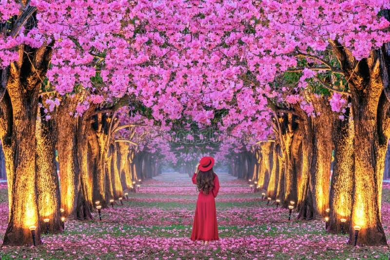 Νέα γυναίκα που περπατά στις σειρές των όμορφων ρόδινων δέντρων λουλουδιών στοκ εικόνα με δικαίωμα ελεύθερης χρήσης