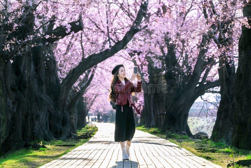 Νέα γυναίκα που περπατά στον κήπο ανθών κερασιών μια ημέρα άνοιξη Δέντρα ανθών κερασιών υπόλοιπου κόσμου στο Κιότο, Ιαπωνία στοκ εικόνα με δικαίωμα ελεύθερης χρήσης