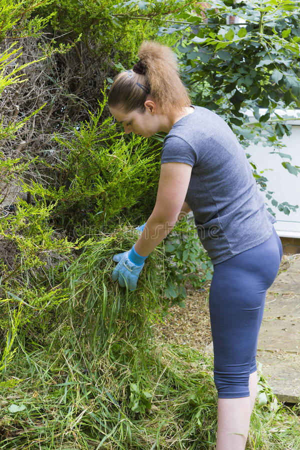 Νέα γυναίκα που συλλέγει τη χλόη στον κήπο στοκ εικόνα με δικαίωμα ελεύθερης χρήσης