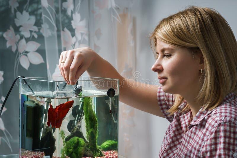 Νέα γυναίκα που ταΐζει τα βήτα ψάρια στο ενυδρείο στο σπίτι στοκ φωτογραφίες με δικαίωμα ελεύθερης χρήσης