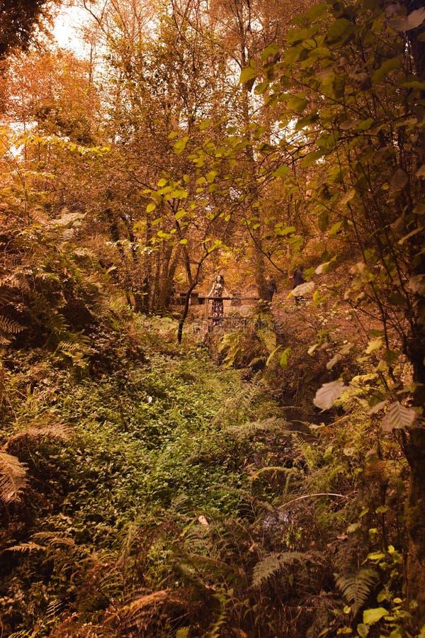 Νέα γυναίκα στη γέφυρα που παρατηρεί τη φύση στοκ εικόνα με δικαίωμα ελεύθερης χρήσης