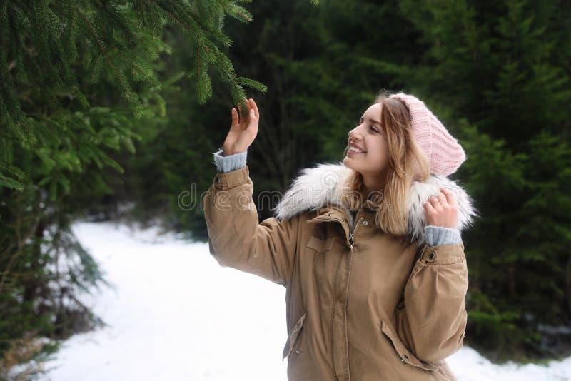 Νέα γυναίκα σχετικά με τον κλάδο έλατου το χιονώδη δασικό χειμώνα στοκ εικόνα