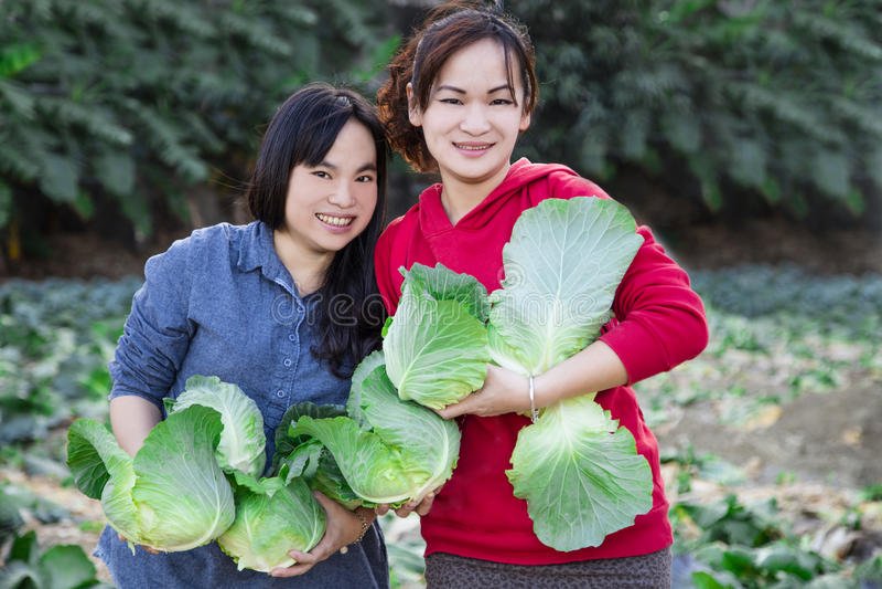 Νέα γυναίκες και λαχανικά στο αγρόκτημα στοκ φωτογραφίες