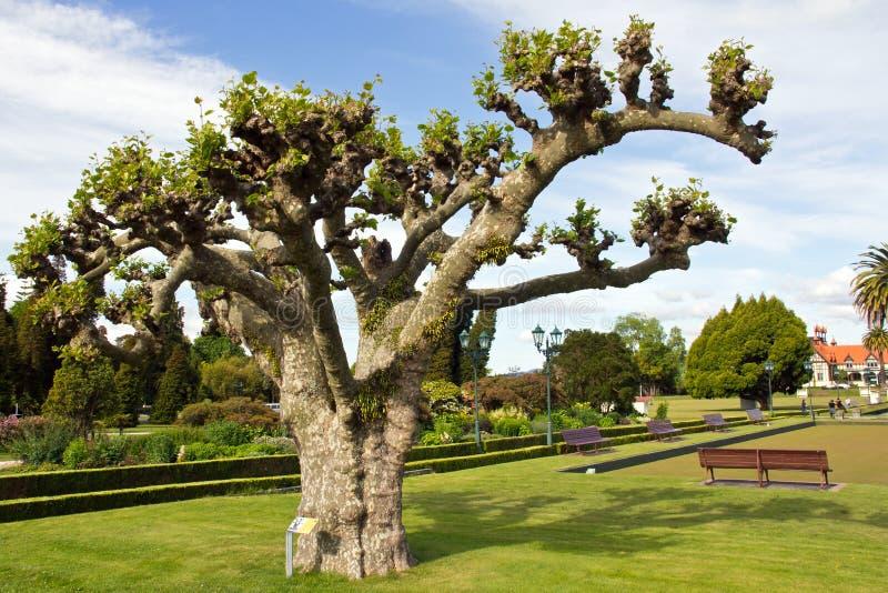Νέα Ζηλανδία, rotorua, κυβερνητικοί κήποι στοκ εικόνες με δικαίωμα ελεύθερης χρήσης