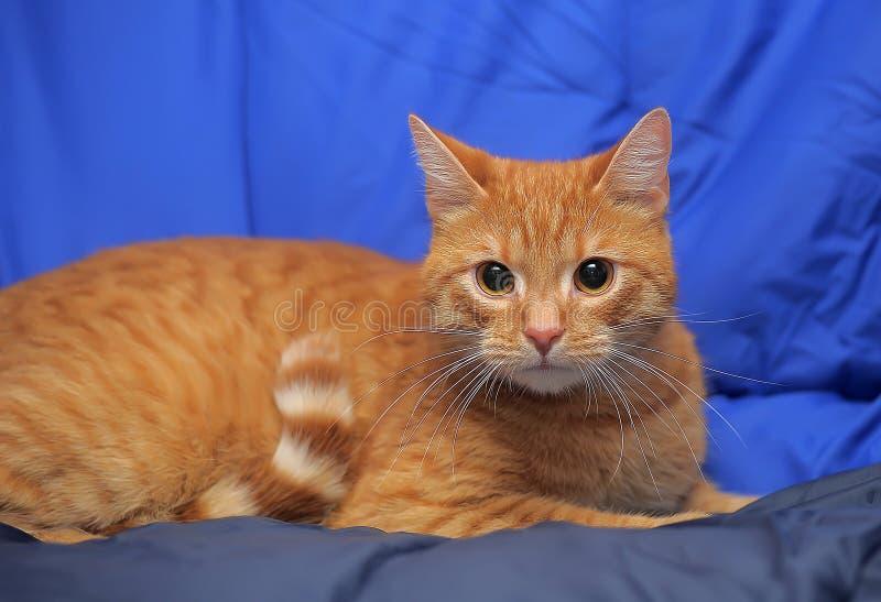 Νέα κόκκινη γάτα στοκ φωτογραφίες με δικαίωμα ελεύθερης χρήσης