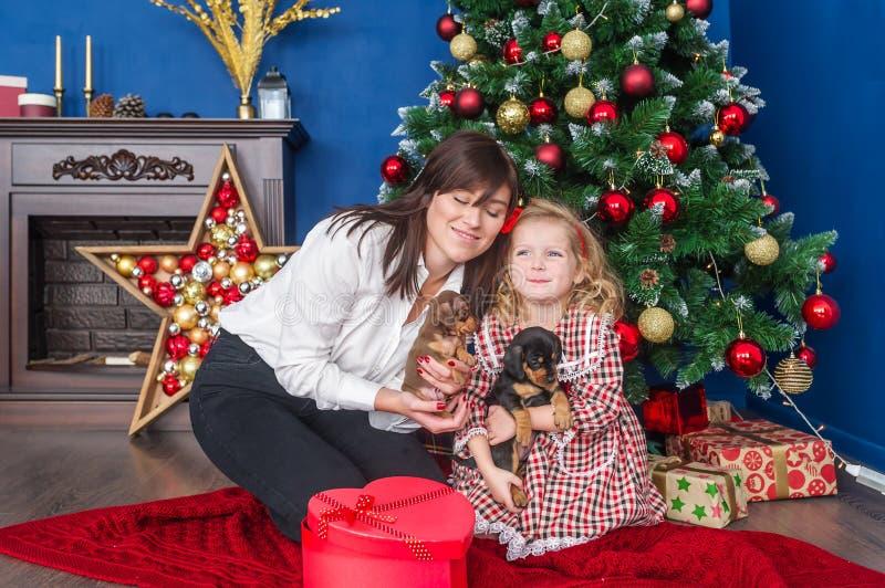 Νέα μητέρα με λίγη χαριτωμένη κόρη και τα μικρά κουτάβια της συνεδρίασης dachshund πλησίον κοντά στο χριστουγεννιάτικο δέντρο στοκ εικόνες