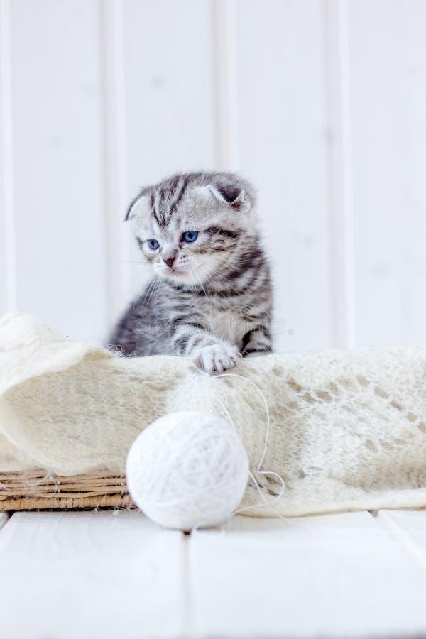 Νέα παιχνίδια γατακιών με την άσπρη σφαίρα του μαλλιού στοκ φωτογραφία με δικαίωμα ελεύθερης χρήσης