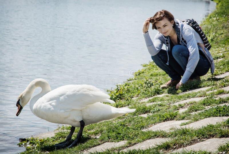 Νέα τοποθέτηση γυναικών με τον άσπρο κύκνο στην όχθη της λίμνης στοκ εικόνες