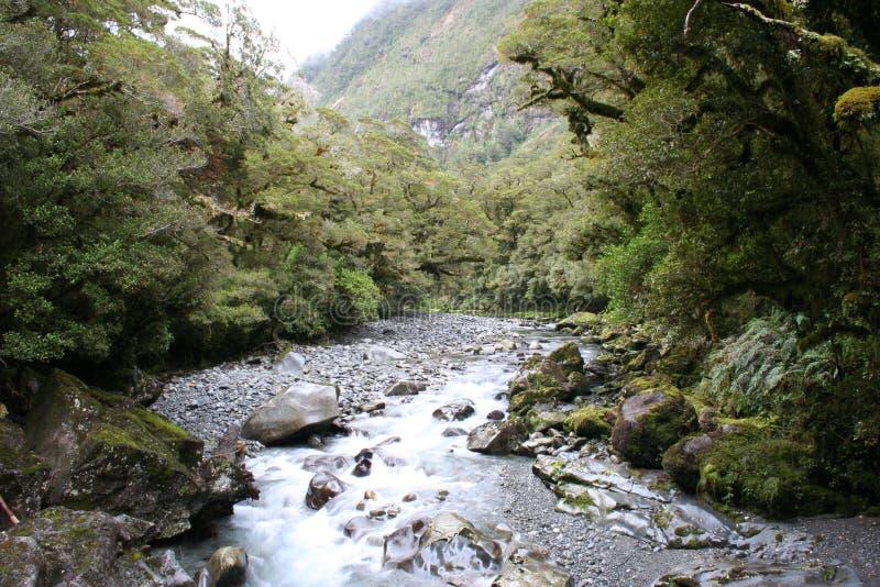 νέα τρεξίματα ποταμών μέσω της Ζηλανδίας στοκ εικόνες