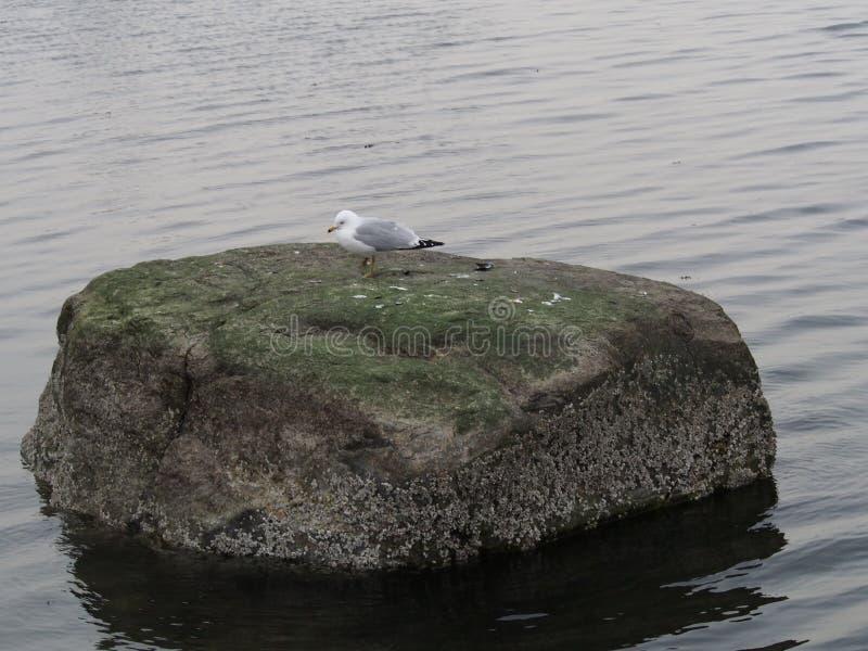 Νέα Υόρκη ξυπνημάτων Bronx βράχου Killie στοκ φωτογραφίες με δικαίωμα ελεύθερης χρήσης