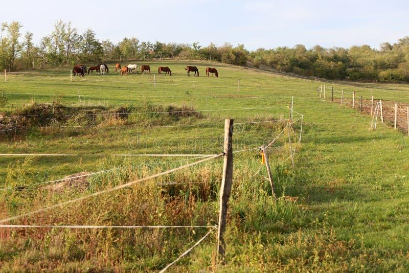 Νέα φοράδες και foals κάστανων που τρώνε τη φρέσκια πράσινη χλόη στο λιβάδι στοκ φωτογραφία με δικαίωμα ελεύθερης χρήσης
