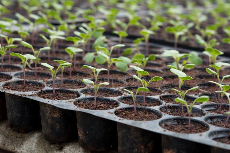 Νέες εγκαταστάσεις στον πλαστικό δίσκο βρεφικών σταθμών, φυτικό αγρόκτημα βρεφικών σταθμών στοκ φωτογραφίες