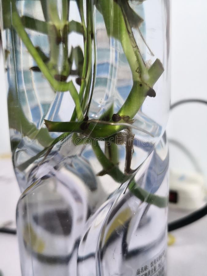 Νέες ρίζες στο νερό στοκ φωτογραφία με δικαίωμα ελεύθερης χρήσης