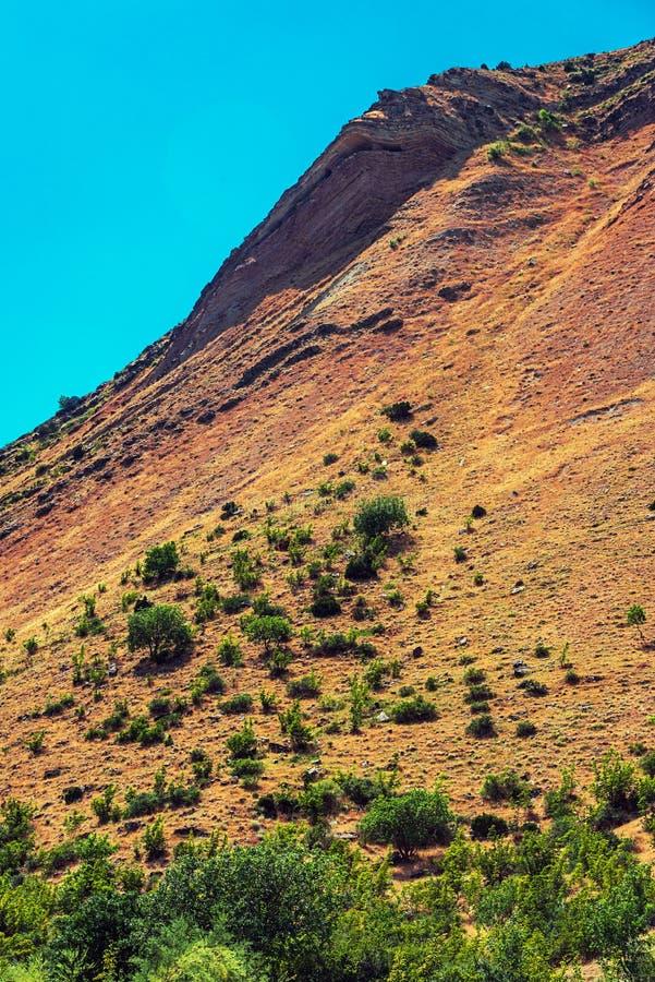 Νέες χαμηλές βαλανιδιές mountainside στοκ εικόνα με δικαίωμα ελεύθερης χρήσης