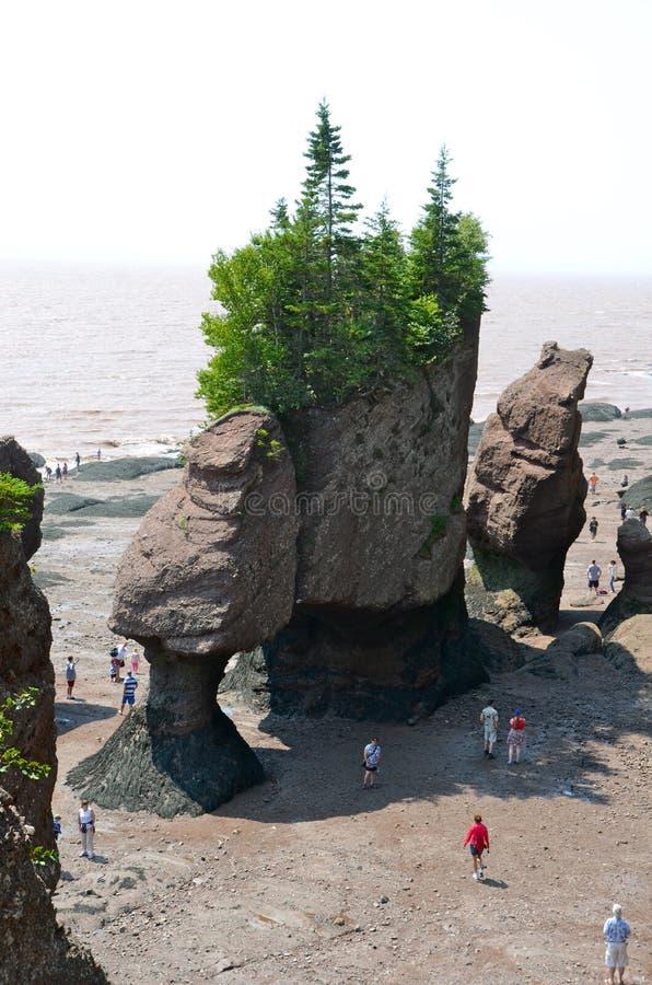 νέοι βράχοι Brunswick Καναδάς hopewell στοκ εικόνα