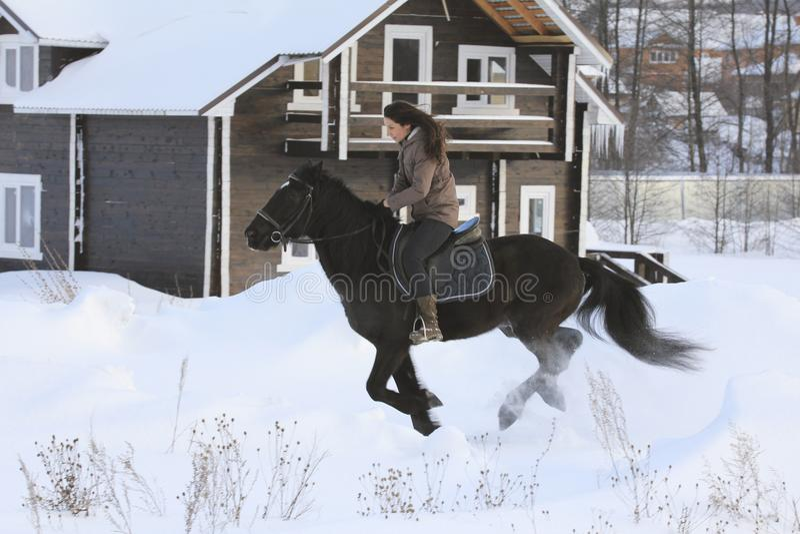 Νέοι γύροι γυναικών στην κορυφή ένα άλογο κόλπων στη χειμερινή επαρχία στοκ εικόνες