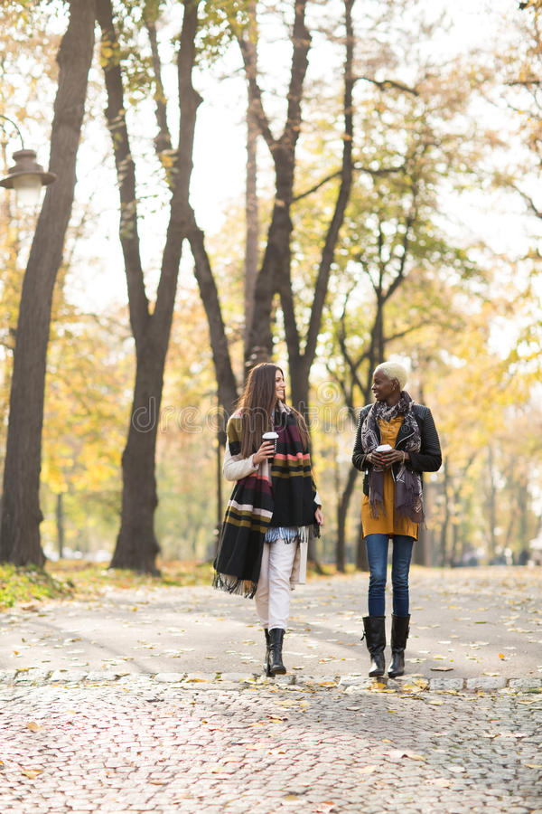 Νέοι πολυφυλετικοί φίλοι που περπατούν γύρω από το πάρκο φθινοπώρου στοκ φωτογραφία