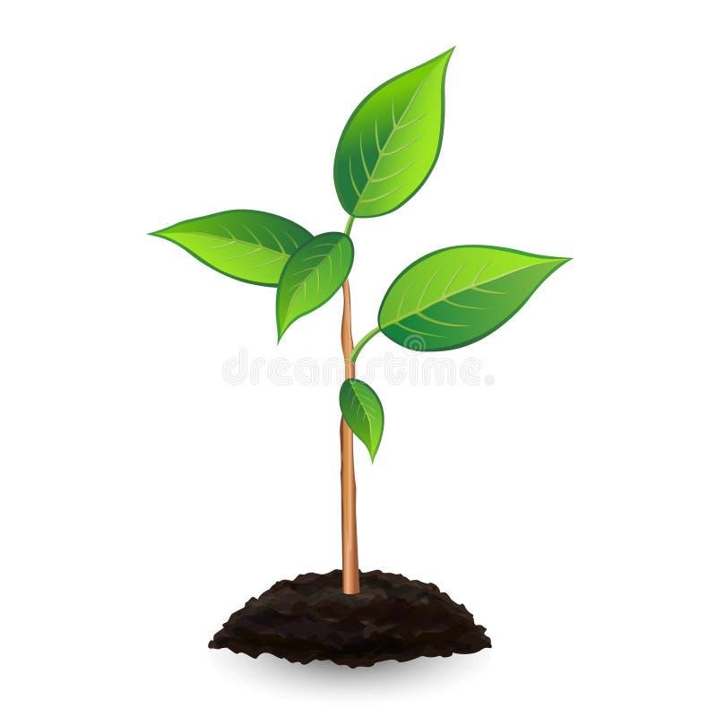 Νέοι πράσινοι νεαρός βλαστός και χώμα, στο άσπρο υπόβαθρο απεικόνιση αποθεμάτων