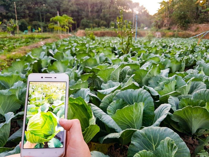 Νέος αγρότης που παίρνει το λαχανικό φωτογραφιών στο κινητό τηλέφωνο, οργανικό σύγχρονο έξυπνο αγρόκτημα 4 Eco έννοια 0 τεχνολογί στοκ φωτογραφία με δικαίωμα ελεύθερης χρήσης