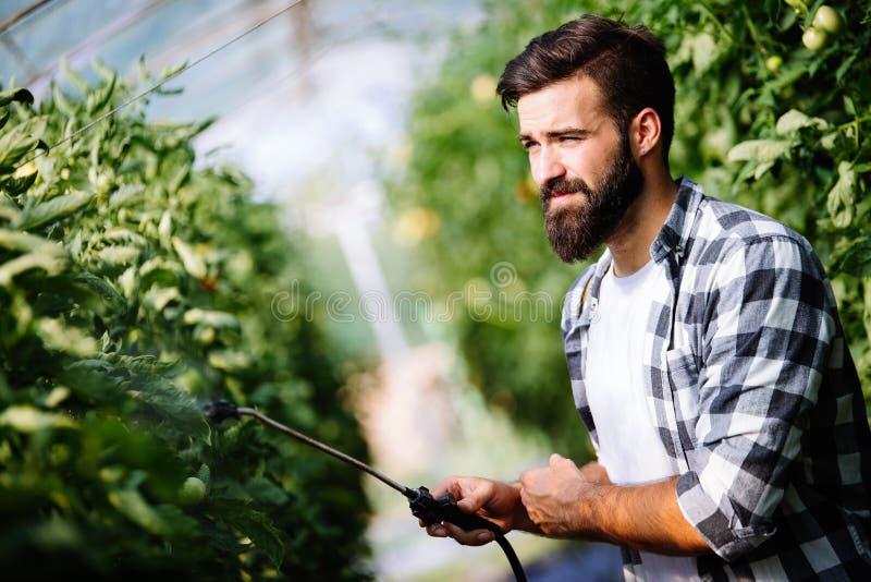 Νέος αγρότης που προστατεύει τις εγκαταστάσεις του με τις χημικές ουσίες στοκ εικόνες
