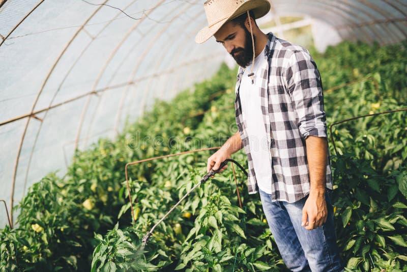 Νέος αγρότης που προστατεύει τις εγκαταστάσεις του με τις χημικές ουσίες στοκ φωτογραφία με δικαίωμα ελεύθερης χρήσης