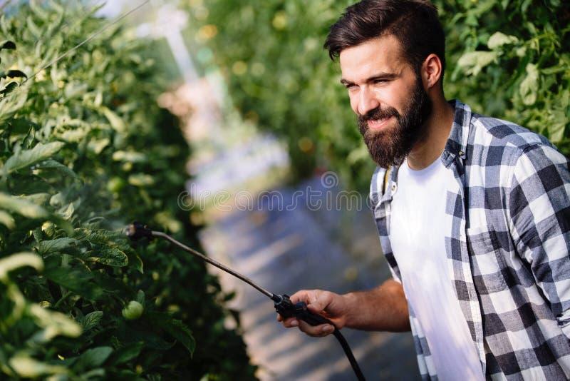 Νέος αγρότης που προστατεύει τις εγκαταστάσεις του με τις χημικές ουσίες στοκ εικόνα