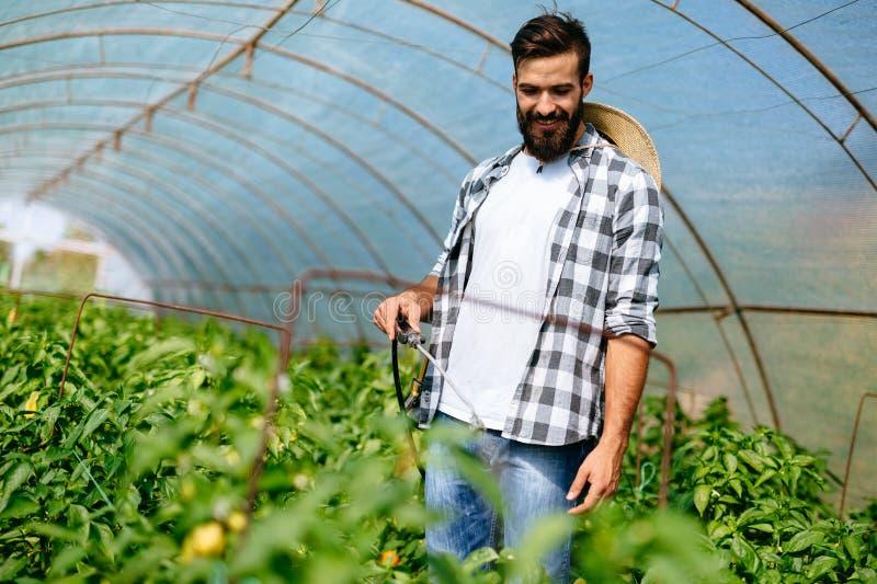 Νέος αγρότης που προστατεύει τις εγκαταστάσεις του με τις χημικές ουσίες στοκ φωτογραφίες