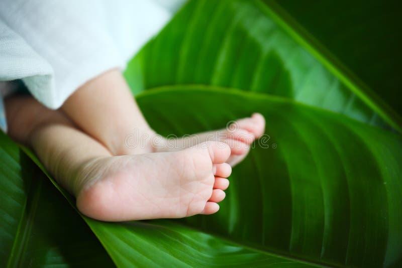 Νέος - γεννημένο πόδι μωρών στο πράσινο φύλλο στοκ εικόνα με δικαίωμα ελεύθερης χρήσης