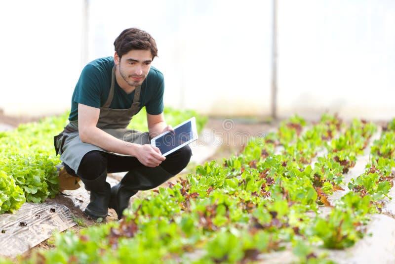 Νέος επιχειρησιακός αγρότης που εργάζεται στην ταμπλέτα του στοκ φωτογραφία με δικαίωμα ελεύθερης χρήσης
