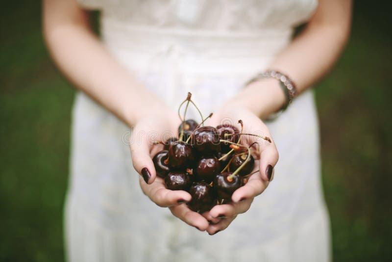 Νέος θηλυκός σωρός εκμετάλλευσης των γλυκών κερασιών στοκ φωτογραφίες