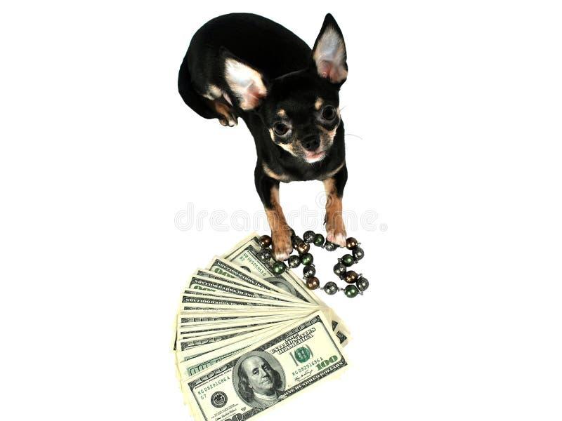 Νέο έτος 2018 κουταβιών Chihuahua στοκ φωτογραφία
