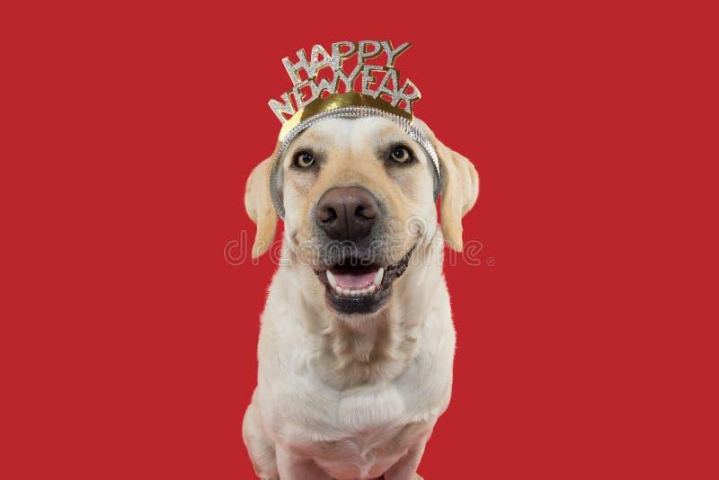 Νέο έτος σκυλιών ΕΥΤΥΧΕΣ ΚΟΥΤΑΒΙ ΛΑΜΠΡΑΝΤΟΡ ΠΟΥ ΦΟΡΑ ΈΝΑ HEADBAND Η ΤΙΑΡΩΝ ΣΗΜΑΔΙ ΜΕ ΤΟ ΚΕΙΜΕΝΟ r στοκ φωτογραφία με δικαίωμα ελεύθερης χρήσης
